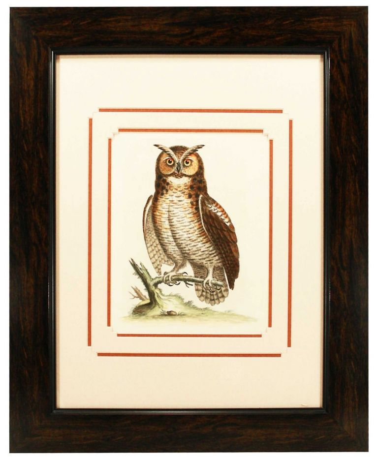 Great Horned Owl Print. George Edwards.