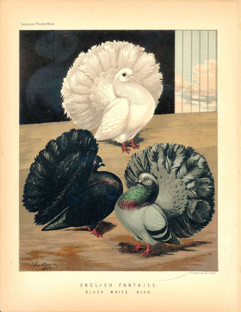 "Cassell's Pigeon Book - ""English Fantails. Black, White, Blue"" Pigeons. Cassell, Lewis Wright, J W. Ludlow, artist."