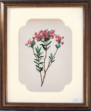 Pale Laurel Print from Flowers and Ferns of America. A. B. Henry.
