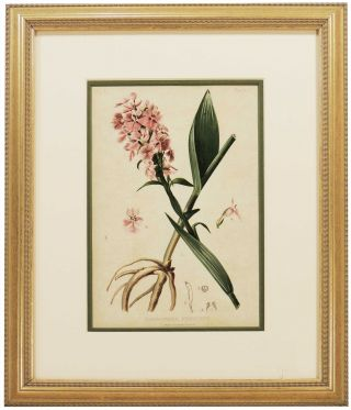Leaf from The Native Flowers and Ferns of the United States. Thomas Meehan