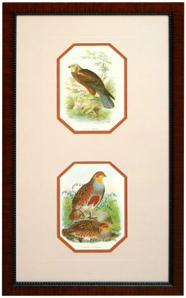 Marsh-Harrier and Common Partridge from A Handbook of the Birds of Great Britain. Richard Bowder Sharpe.