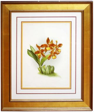 Orchid - Chromolithograph. Frederick Sanders Reichenbachia
