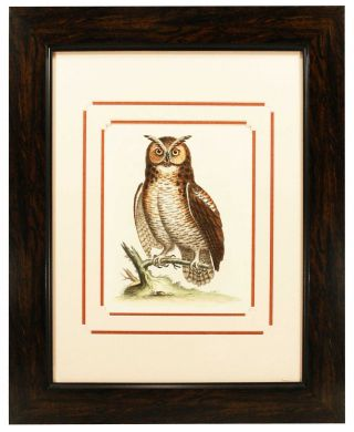 Great Horned Owl Print. George Edwards