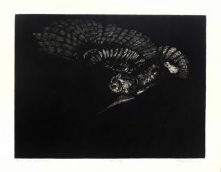 Flying Great Horned Owl [Original Print]. Cheloniidae Press, Alan James Robinson, artist.