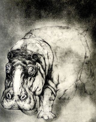 Hippo Walk [Original Print]. Cheloniidae Press, Alan James Robinson, artist.
