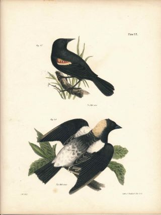 Bird print - Plate 22 from Zoology of New York, or the New-York Fauna. Part II Birds. James E. De...