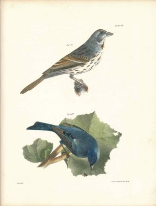 Bird print - Plate 68 from Zoology of New York, or the New-York Fauna. Part II Birds. James E. De...