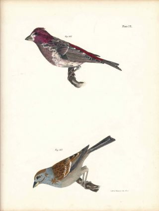 Bird print - Plate 72 from Zoology of New York, or the New-York Fauna. Part II Birds. James E. De...