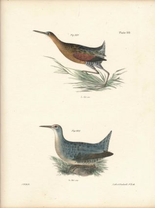 Bird print - Plate 99 from Zoology of New York, or the New-York Fauna. Part II Birds. James E. De...