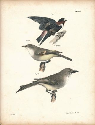 Bird print - Plate 30 from Zoology of New York, or the New-York Fauna. Part II Birds. James E. De...