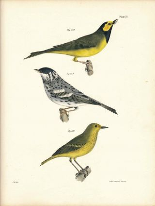 Bird print - Plate 57 from Zoology of New York, or the New-York Fauna. Part II Birds. James E. De...