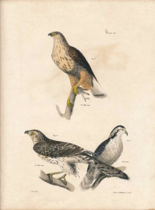 Bird print - Plate 2 from Zoology of New York, or the New-York Fauna. Part II Birds. James E. De...