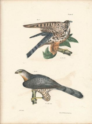 Bird print - Plate 4 from Zoology of New York, or the New-York Fauna. Part II Birds. James E. De...