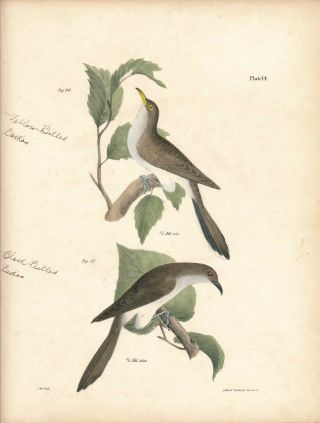 Bird print - Plate 14 from Zoology of New York, or the New-York Fauna. Part II Birds. James E. De...