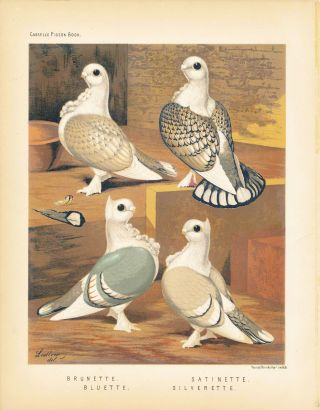 "Cassell's Pigeon Book - ""Brunette, Bluette, Satinette, Silverette"" Pigeons. Cassell, Lewis..."