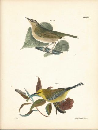 Bird print - Plate 55 from Zoology of New York, or the New-York Fauna. Part II Birds. James E. De...