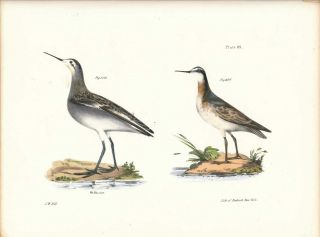 Bird print - Plate 89 from Zoology of New York, or the New-York Fauna. Part II Birds. James E. De...