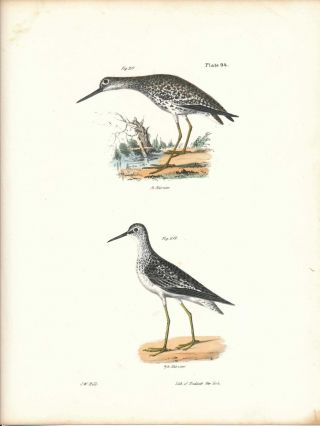 Bird print - Plate 94 from Zoology of New York, or the New-York Fauna. Part II Birds. James E. De...