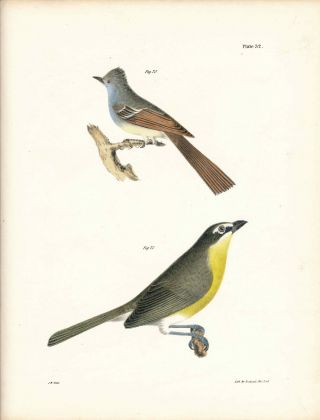Bird print - Plate 32 from Zoology of New York, or the New-York Fauna. Part II Birds. James E. De...