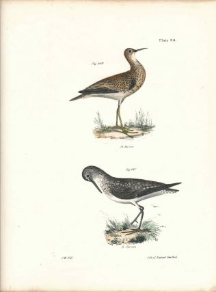 Bird print - Plate 93 from Zoology of New York, or the New-York Fauna. Part II Birds. (Plovers)....