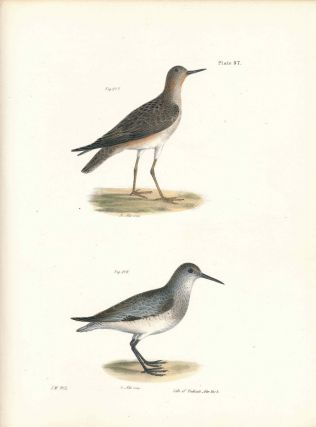 Bird print - Plate 97 from Zoology of New York, or the New-York Fauna. Part II Birds....