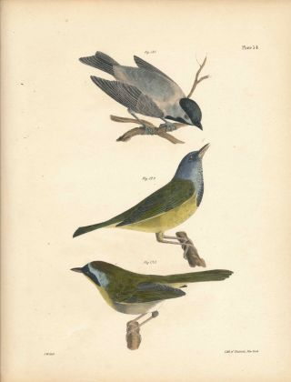 Bird print - Plate 54 from Zoology of New York, or the New-York Fauna. Part II Birds. (Titmouse...