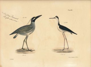 Bird print - Plate 88 from Zoology of New York, or the New-York Fauna. Part II Birds. (Herons)....