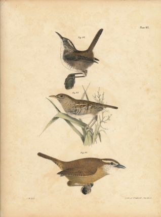 Bird print - Plate 42 from Zoology of New York, or the New-York Fauna. Part II Birds. (Wrens)....