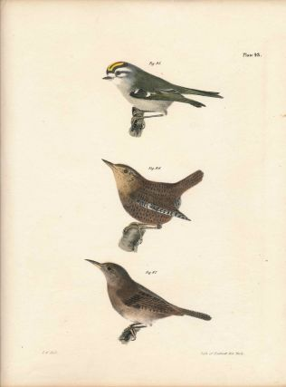 Bird print - Plate 43 from Zoology of New York, or the New-York Fauna. Part II Birds. (Wrens and...