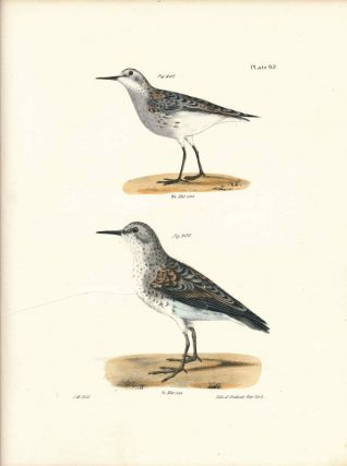 Bird print - Plate 92 from Zoology of New York, or the New-York Fauna. Part II Birds....