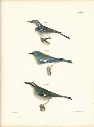 Bird print - Plate 48 from Zoology of New York, or the New-York Fauna. Part II Birds. (Warblers)....