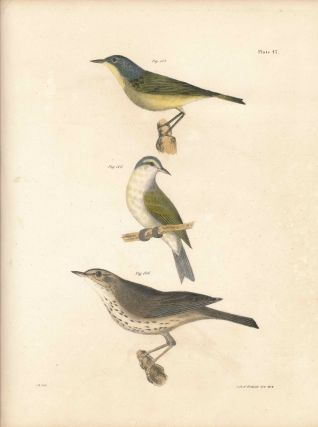 Bird print - Plate 47 from Zoology of New York, or the New-York Fauna. Part II Birds. (Warblers...
