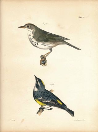 Bird print - Plate 46 from Zoology of New York, or the New-York Fauna. Part II Birds. (Oven Bird...