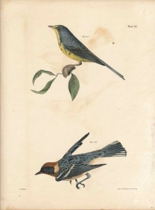Bird print - Plate 51 from Zoology of New York, or the New-York Fauna. Part II Birds. (Warblers)....