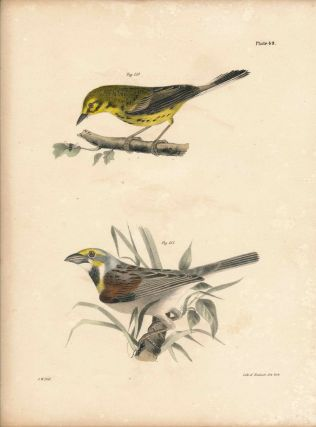 Bird print - Plate 49 from Zoology of New York, or the New-York Fauna. Part II Birds. (Warbler...